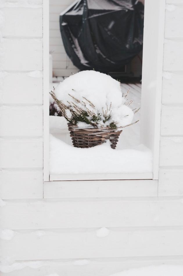talvi7